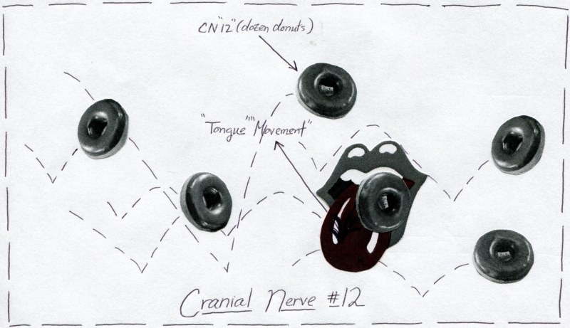 Cranial Nerve 12 Function