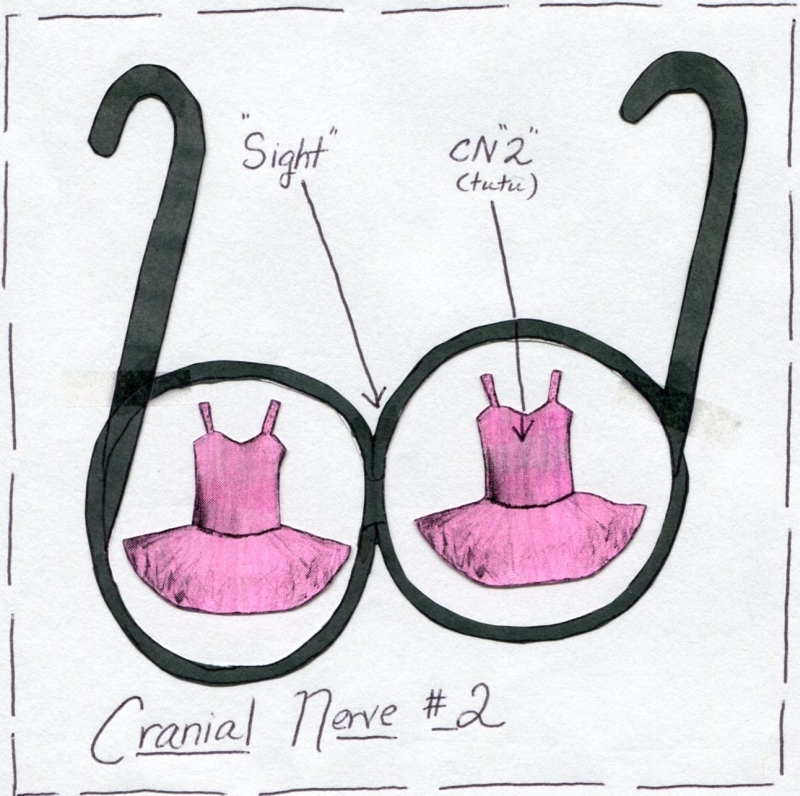 Cranial Nerve 2 Function